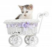 Cute little kitten in stroller isolated on white poster