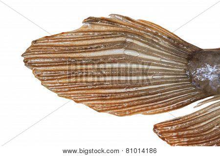Tail Of Arowana Fish