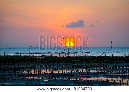 Algae Farm Field In Sunset, Indonesia