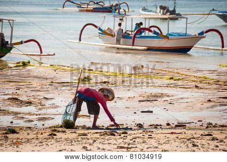 Woman Picking Algae On The Beach
