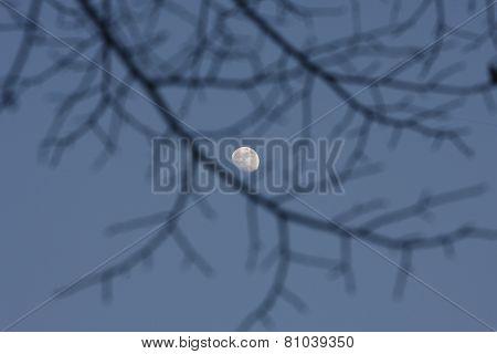Full Moon Shining Through Black Branches In Night