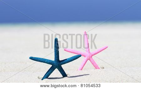 Two Star Fish Beached
