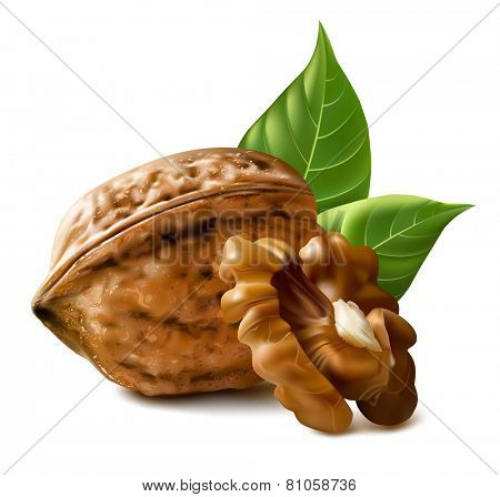 Walnuts with leaves and kernel walnut. Vector illustration.