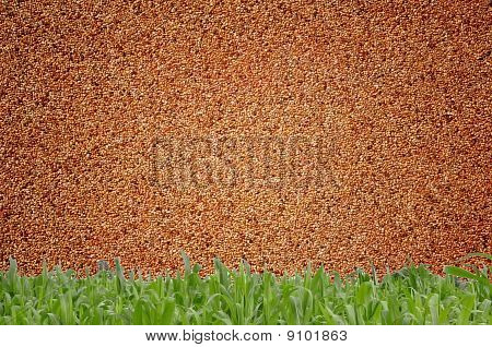 Small Sand wall And Green Grass