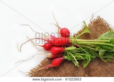 Fresh radish with haulm on sackcloth. Not isolated