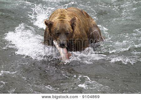 Surprised Salmon