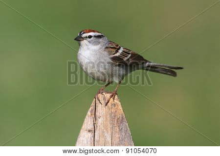 Sparrow On A Perch With A Colorful Background