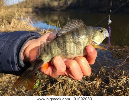 Fisherman on the river bank, a fisherman caught a perch.