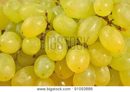 Green Grapes Close Up