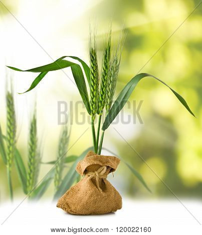 Image Of Wheat In A Sack On A Green Background Closeup