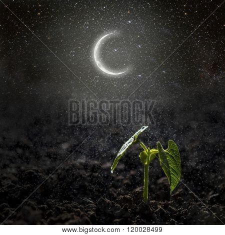 Green seedling growing on the moon and stars. Elements of this image furnished by NASA