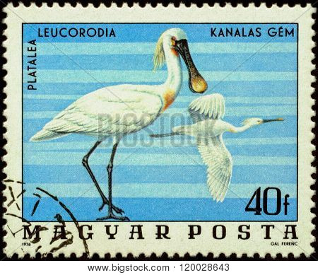 Bird Spoonbill (platalea Leucorodia) On Postage Stamp