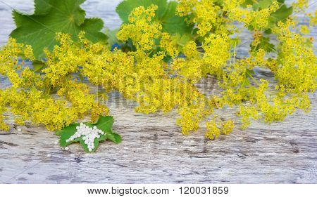 Herb Lady's Mantle, Globules