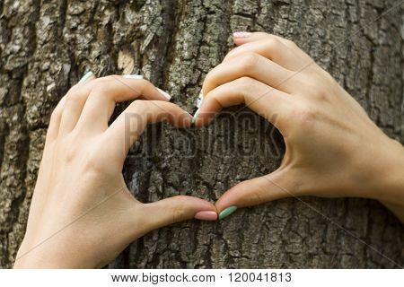 Female hands making an heart shape on a trunk of a tree. Great ec