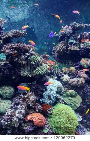 Beautiful Underwater World With Corals And Tropical Fish