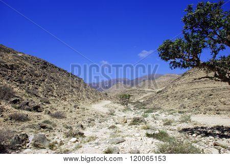 A Stoney Desert In Oman