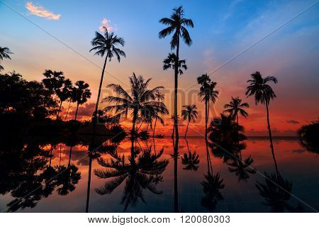 Tall Coconut Palm Trees At Twilight Sky Reflected In Water