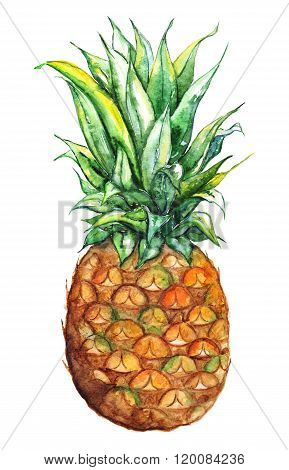 Watercolor Hand Drawn Pineapple Exotic Tropical Fruit Isolated
