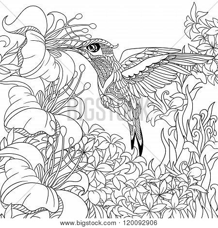 Zentangle Stylized Hummingbird