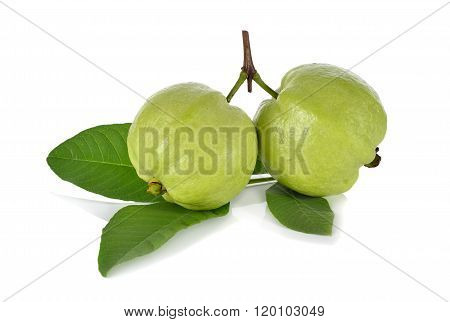 whole fresh Guava with stem leaves on white background poster