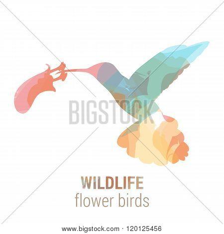 Wildlife banner - bird colibri