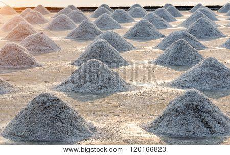 Middle Focused. Salt Farm Ready For Harvest, Thailand