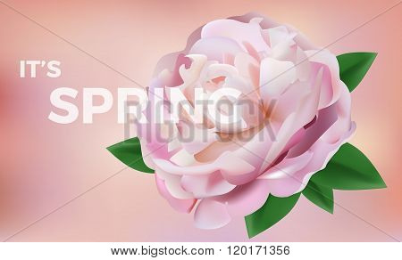 Pink Rose Petals In Soft Color. Blur Style Vector Background