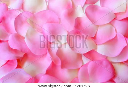 Petals As Background F