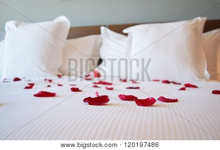 Saint valentine's day, white large bed with the rose petals, red rose petals on the big bed