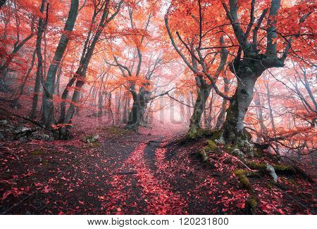 Beautiful Magic Red Forest In Fog In Autumn. Fairytale Landscape