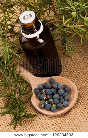 Branch Of Conifers Junipers, Wooden Spoon Ful Of Blue Berries, Twig Of Rosemary And Little Bottle Of