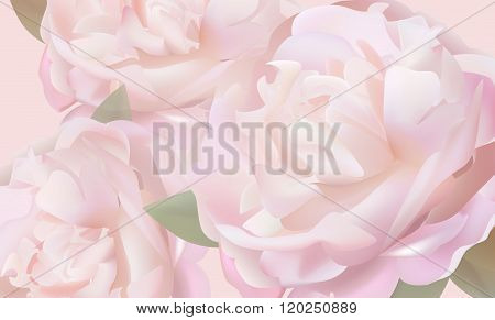 Flower Background With Peonies And Petals
