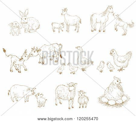 Baby and mother animals