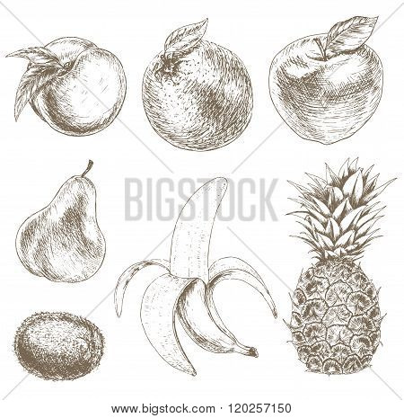 Sketch of fruit