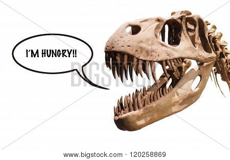 Tyrannosaurus Rex head with thought ballon with the word I´m Hungry!! on white isolated background with copyspace.
