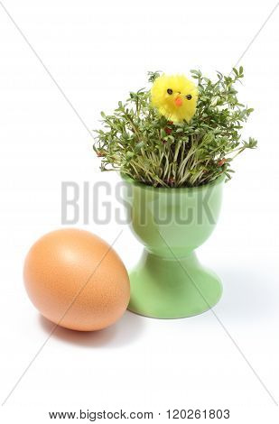 Easter Chicken On Watercress In Green Cup And Fresh Egg