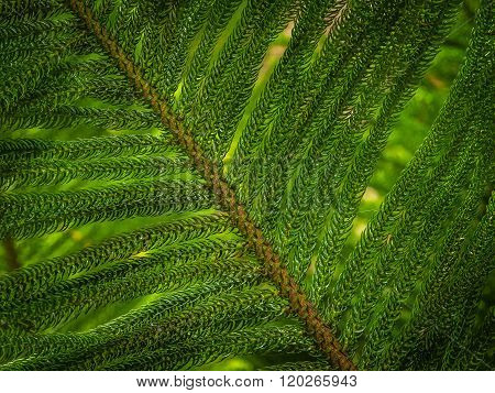 Giant fern detail