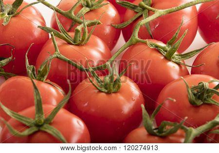 photo of very fresh tomatoes presented on white background