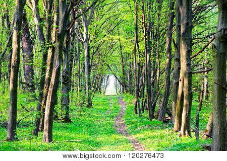 Path In Beautiful Green Park