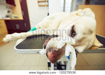 Sick Dog In The Veterinary Clinic