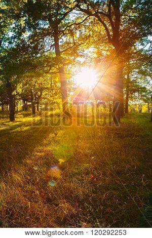 Sunset Sunrise In Forest Trees. Natural sunlight