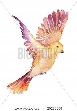 Watercolor illustration of a yellow  bird flying, isolated on wh