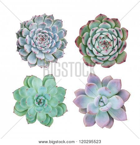succulent plant in the desert collection