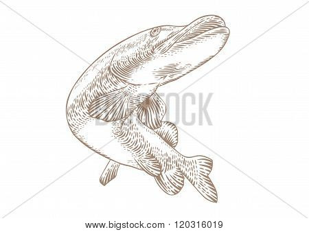 Isolated Swimming Fish