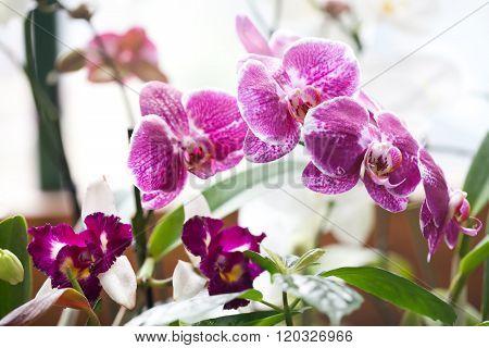 Violet orchids flowers macro view. soft focus