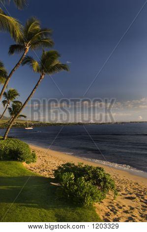 Tropical Afternoon In Hawaii