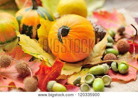 Mini Decorative Pumpkins With Acorns On Autumn Leaves