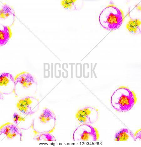 Human dendritic cells