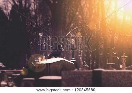 Black raven sitting on the grave in the cemetery. Vintage and scary background