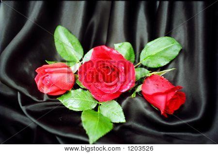 Red Roses On Black Bkg. 04490009